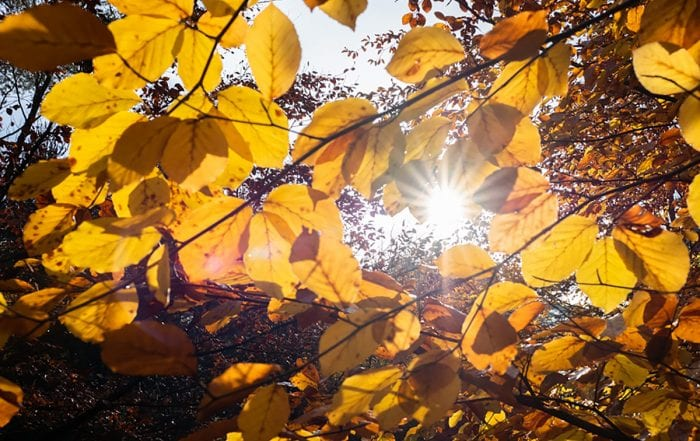 Tips for enhancing your wellbeing this extraordinary 2020 Autumn